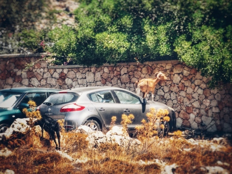 Hazards for Rental Cars in Rhodes (c) Planative